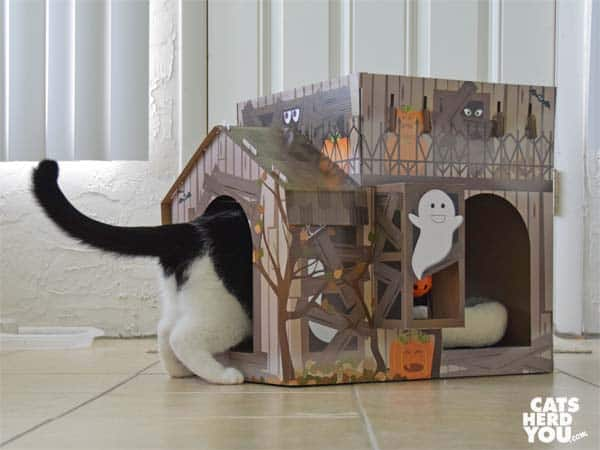 black and white tuxedo cat enters haunted house