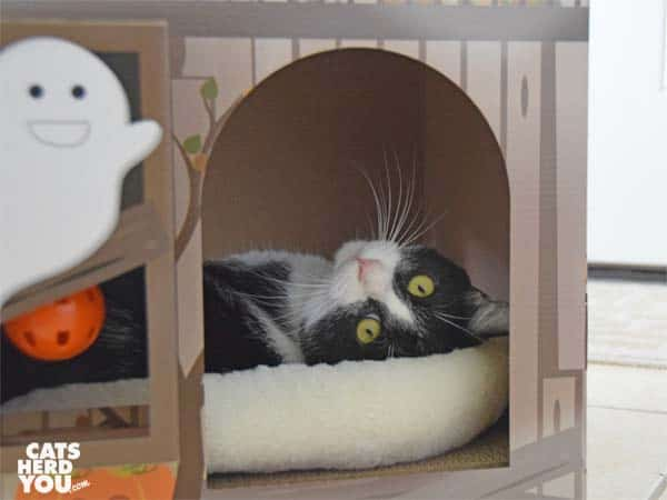 black and white tuxedo cat in haunted house