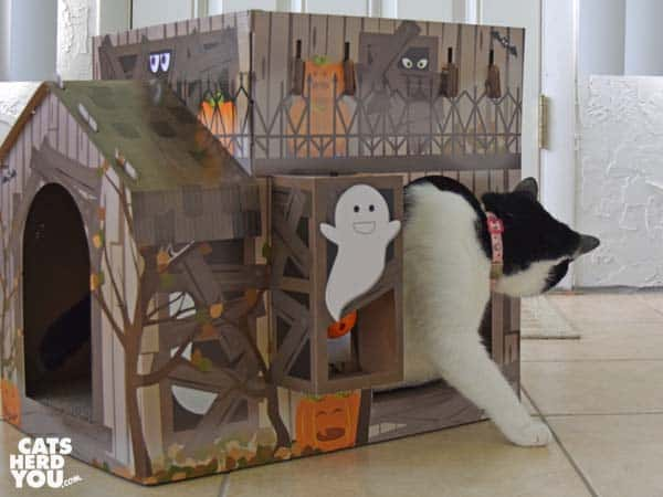 black and white tuxedo cat exits haunted house