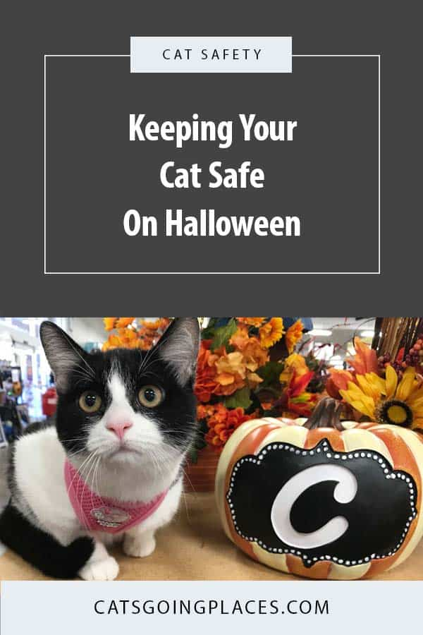 Keeping your cat safe on Halloween. #cats #catsafety #halloweensafety