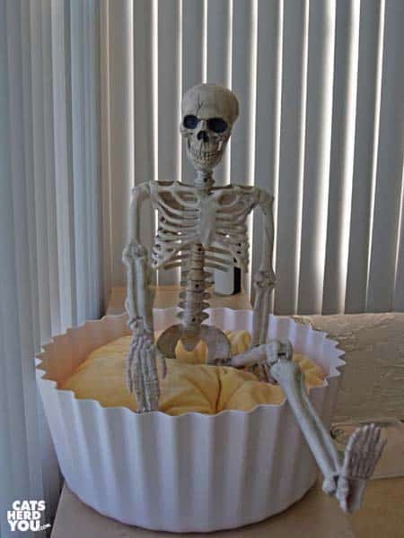 skeleton sitting in cupcake bed