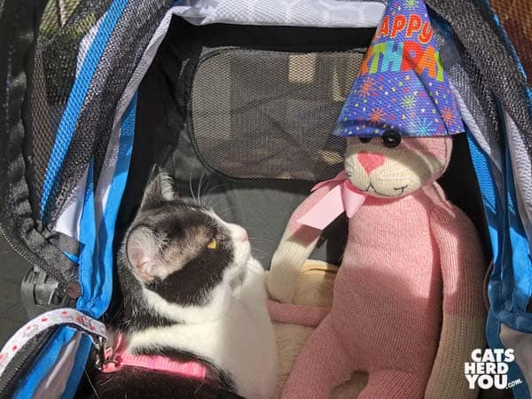 tuxedo cat looks at sock monkey/cat wearing party hat