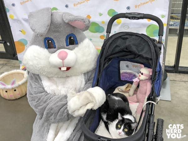 black and white tuxedo cat visits Easter Bunny