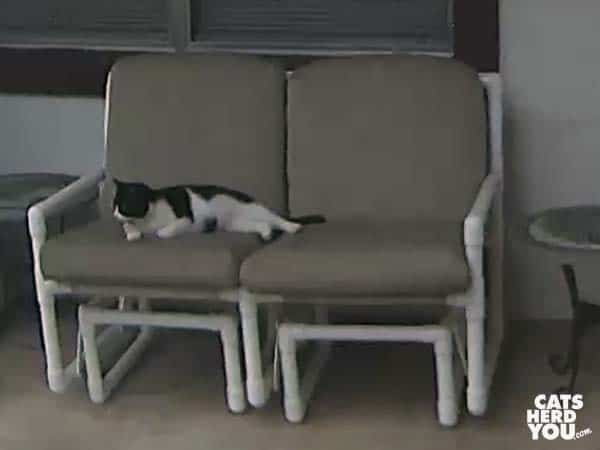 tuxedo cat rests on outdoor glider