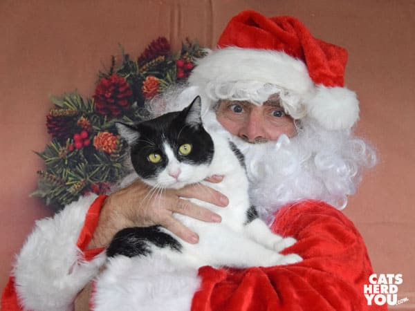 black and white tuxedo cat with santa