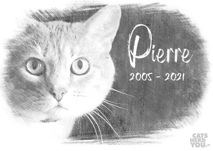 In memory: Pierre 2005 - 2021