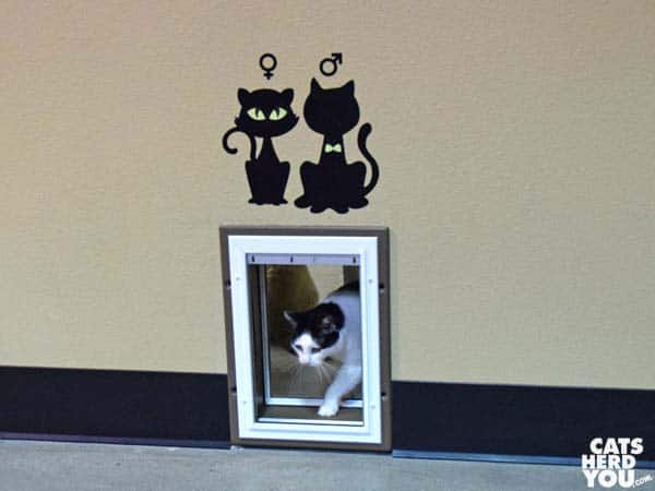 Orlando Cat Cafe litterbox door