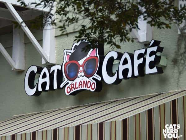 Orlando Cat Cafe sign